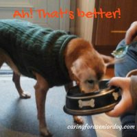 ways to help keep your older dog comfortable