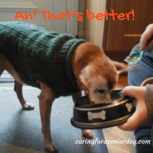 Dog Having Trouble Keeping Food Down