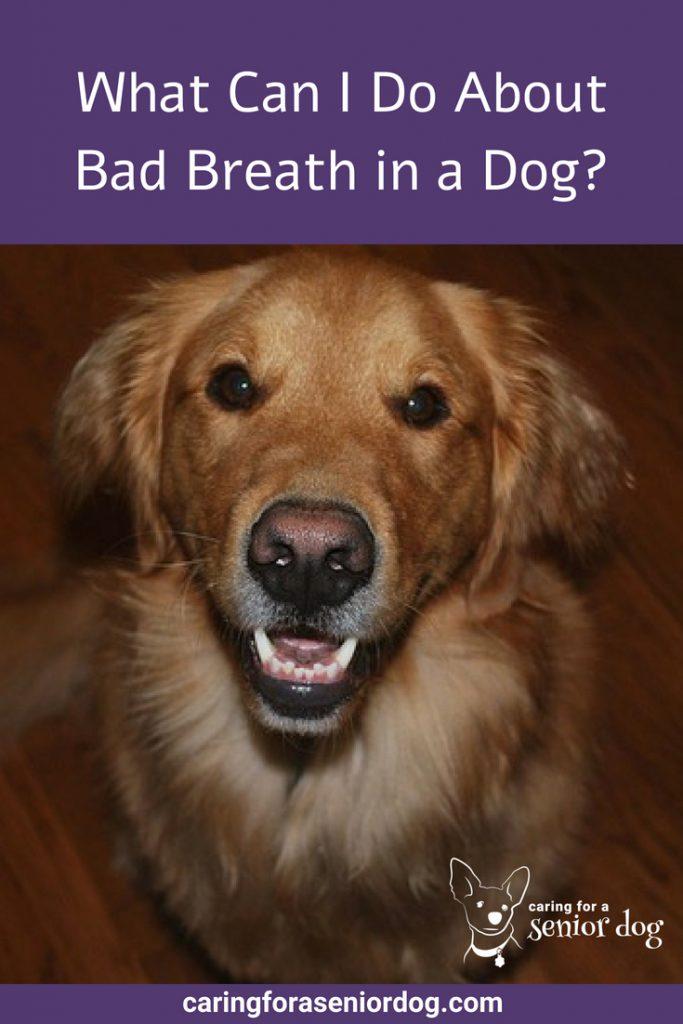 What Can I Do About Bad Breath in a Dog