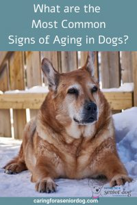 What are the Most Common Signs of Aging in Dogs