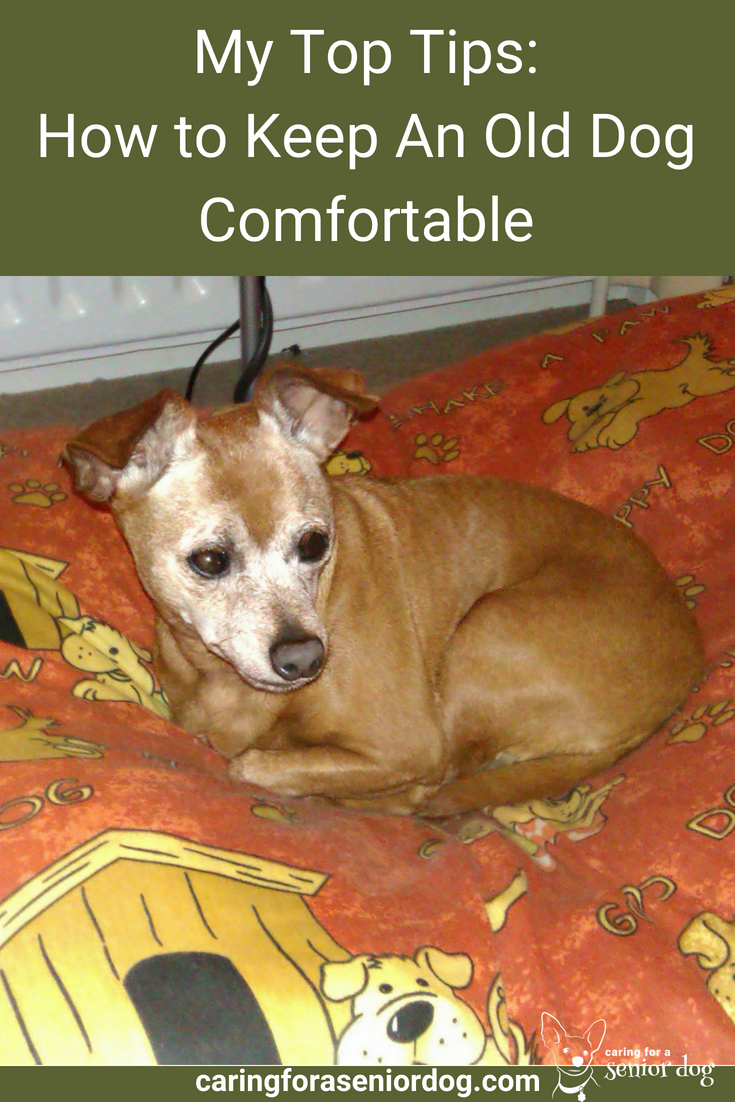 my top tips for how to keep an old dog comfortable