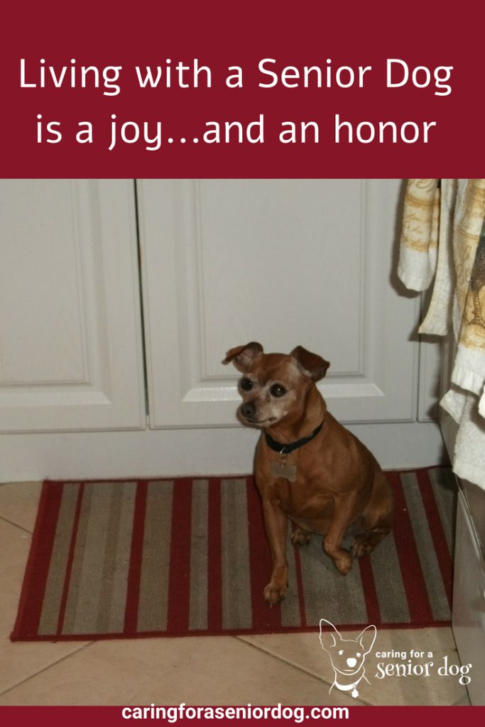 the joy of living with a senior dog