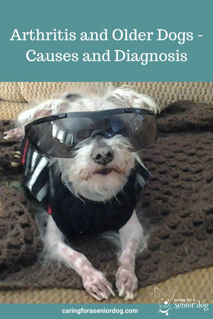 Arthritis and Older Dogs Causes and Diagnosis