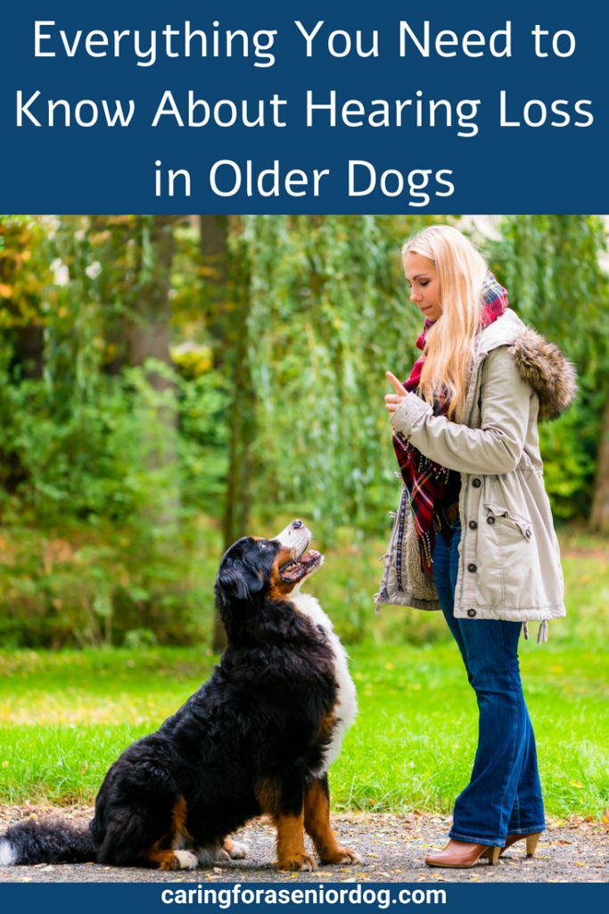 Everything you need to know about hearing loss in older dogs