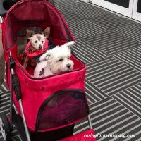 Confidence Deluxe Pet Stroller holds two small dogs