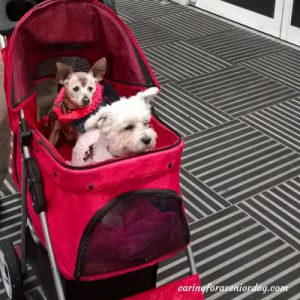 the pet stroller I use for my senior dog Red