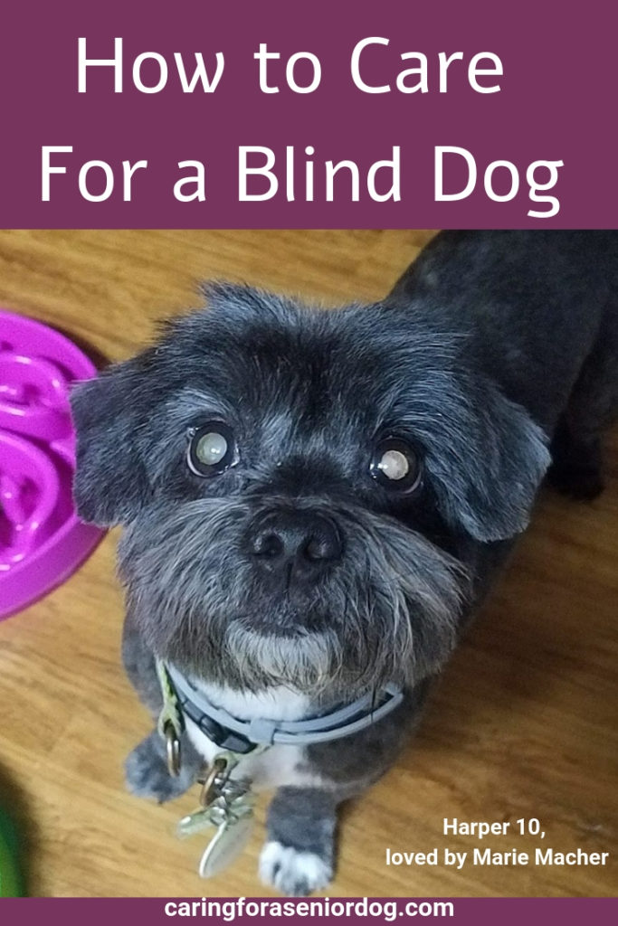 How to care for a blind dog