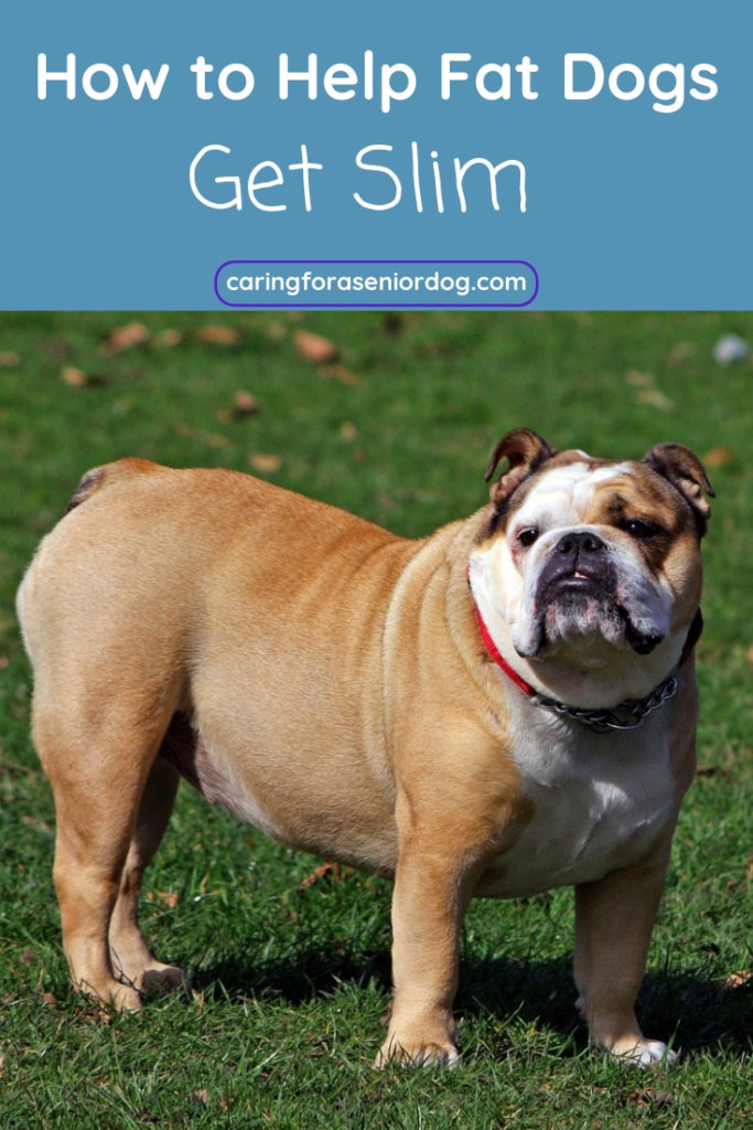 How to help fat dogs get slim