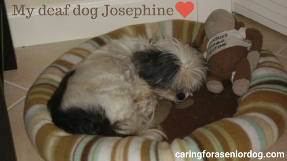 Josephine was a victim of hearing loss in older dogs