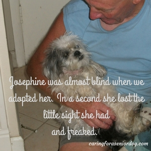Josephine suffered from eye problems in dogs