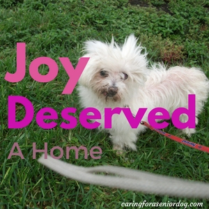 Joy was an old dog who deserved a home