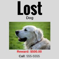 what to do if your dog goes missing