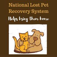 lost-my-doggie