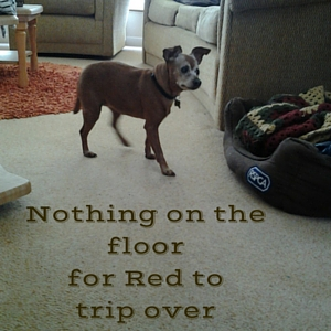 caring for an aging dog in a clutter free home