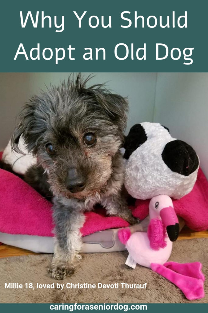 Why You Should Adopt an Old Dog