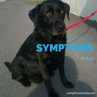 arthritis symptoms in dogs