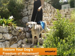 Best options for arthritic dog to get around