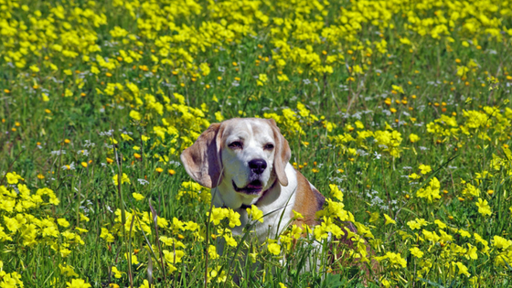 how to keep a dog with arthritis comfortable