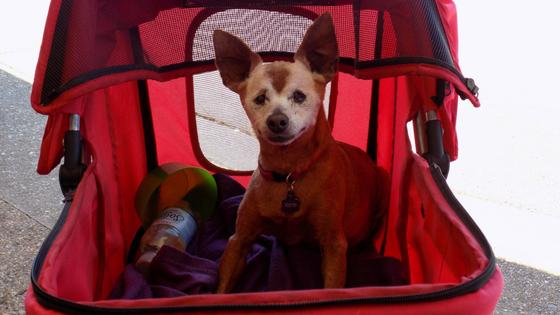 more ways to keep a dog with arthritis comfortable