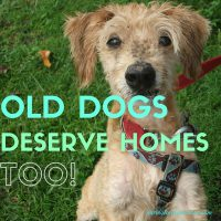 old dogs deserve homes too