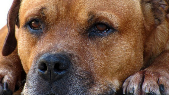 pain relief for dogs with arthritis