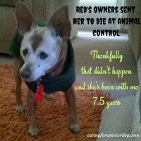 senior dogs deserve homes too