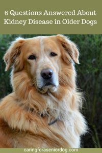6 Questions Answered About Kidney Disease in Older Dogs