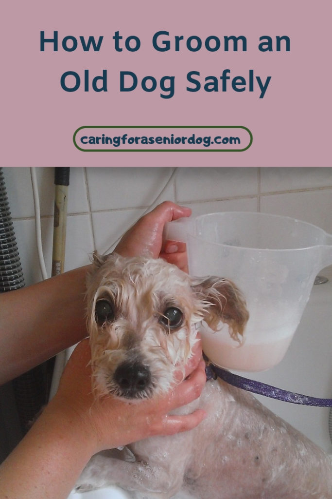 How to groom an old dog safely