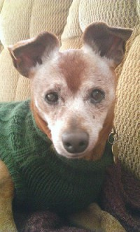 How to Treat Kidney Disease in Dogs - Caring for a Senior Dog