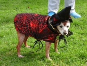 ways to keep a dog safe on Halloween