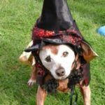 Red in witch costume outside2
