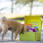 Surprise My Pet box with dog inside