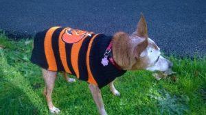 how to keep a dog safe on Halloween