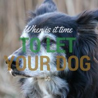 when is it time to let your dog go