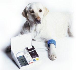 dog blood pressure cuff
