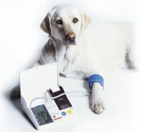 dog blood pressure cuff