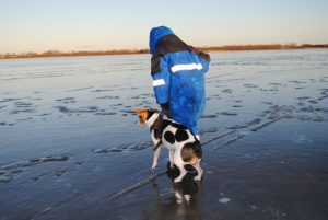 dog on frozen lake