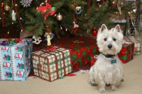dog with Christmas presents