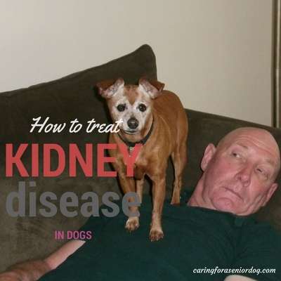 how to treat kidney disease in dogs