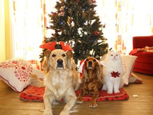 pets in front of Christmas tree