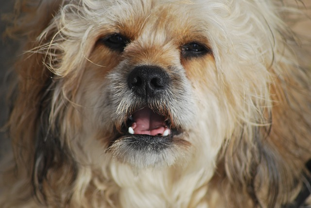 10 Hot Tips To Keep Your Senior Dog Warm And Protected