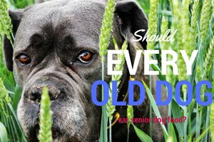 should-every-old-dog-eat-senior-dog-food