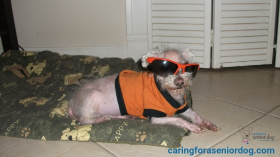 Cushing S Disease In Dogs Symptoms Diagnosis And