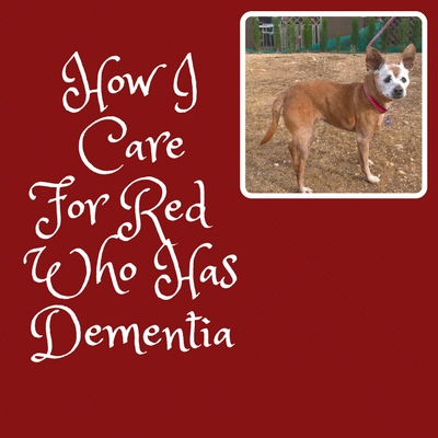 How I care for Red who has doggie dementia