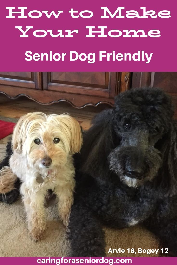 How to make your home senior dog friendly