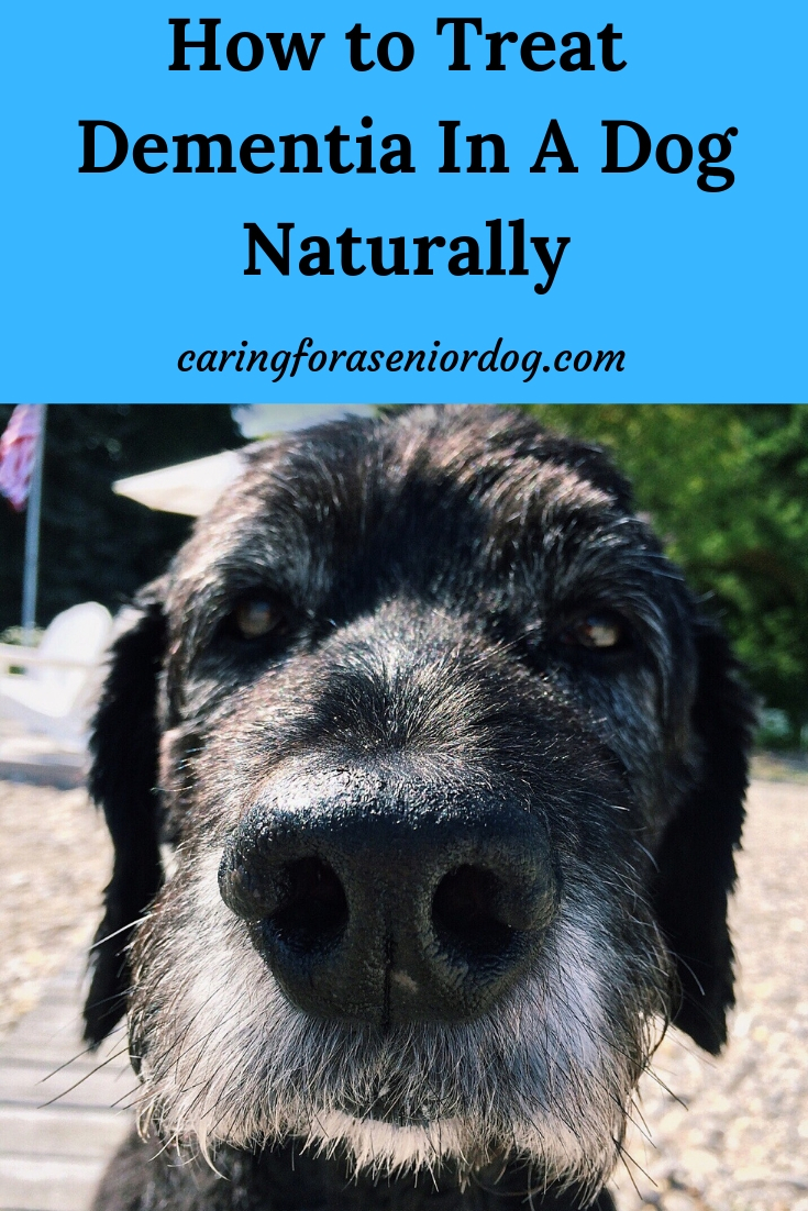How to treat dementia in a dog naturally