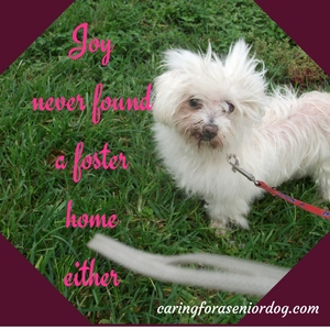 why you should foster an old dog