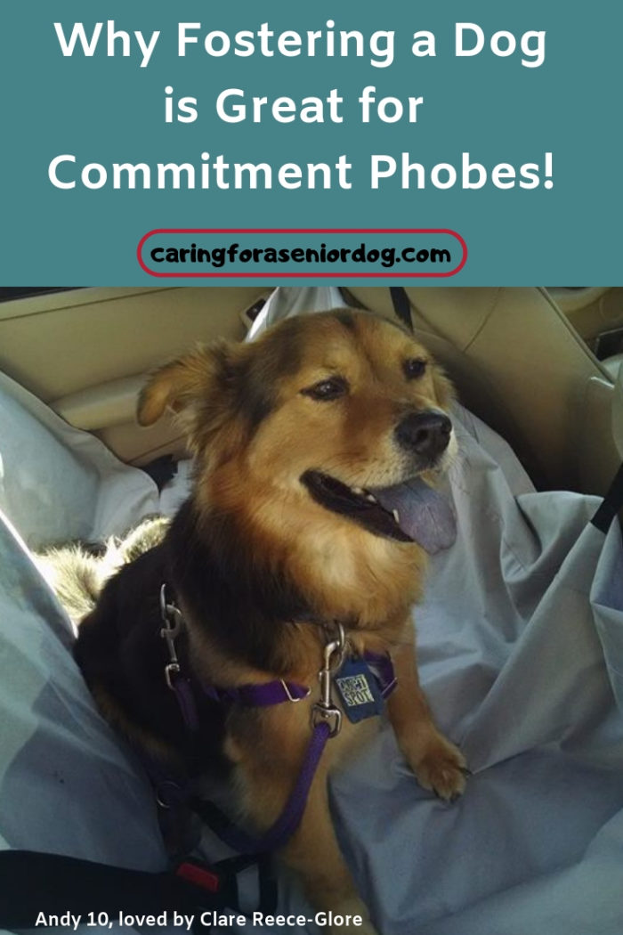 Why fostering a dog is great for commitment phobes