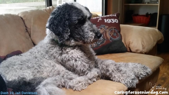 Why fostering a senior dog is great for commitment phobes