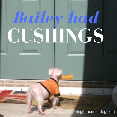 cushings disease in dogs